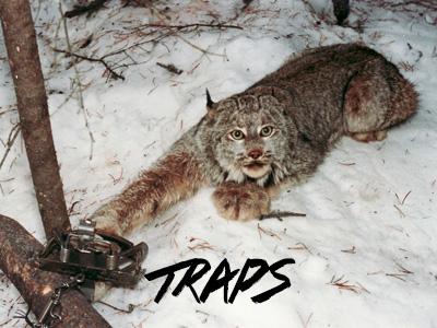 makefurhistory-trapssplash
