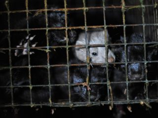 Fur Farm Photos