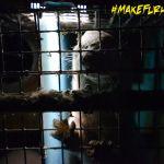 Inside a Quebec fur farm (2014).