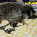 Raccoon left in a cuff-type trap. Photo provided by Critter Care Wildlife (2014).