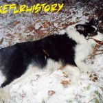 A Border Collie named Sky was killed by a leg-hold trap in Barriere (2005).